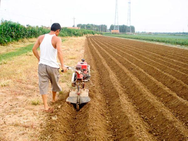 Земли, входящие в категорию личного подсобного хозяйства, облагаются налогом по минимальной ставке
