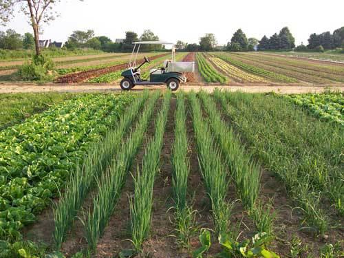 Если служащему принадлежит участок земли в поле, то возводить на нем дом нельзя, он может быть использован лишь для производства продукции
