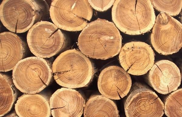 Для чего нужна декларация о сделках с древесиной