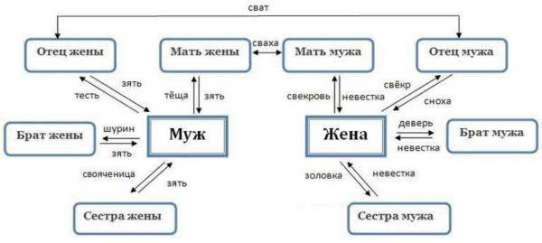 Схема родства вертикального и горизонтального
