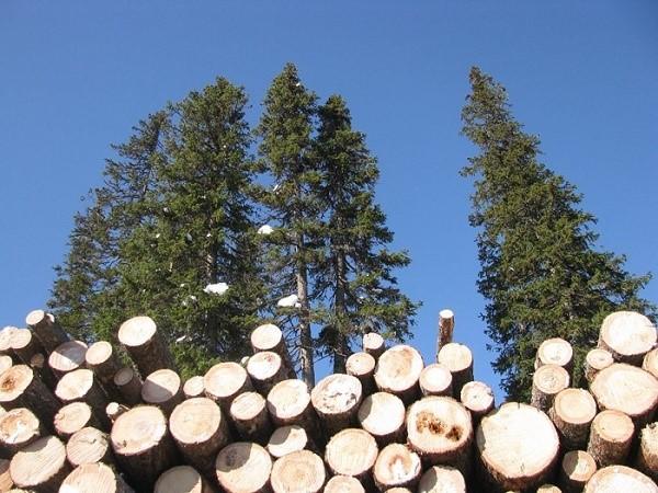 Заполнение обсуждаемого документа необходимо, если в сделке участвует такой природный ресурс, как древесина