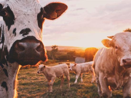 Домашний скот останется во владении
